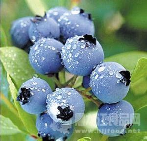 野生蓝莓可消除高脂饮食的不良影响